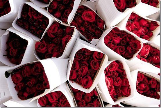 Red Roses on Pinterest