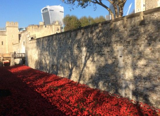 5 Poppies beneath the ancient walls
