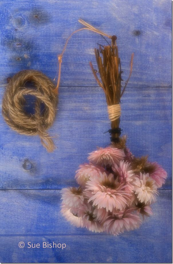 dried flowers 1