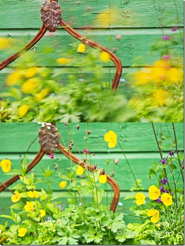 Demonstration of using different shutter speeds with flowers blowing in the wind, Shutter Speed, fast Shutter speed, freezing action, Hand held, Camera Shake, Panning,