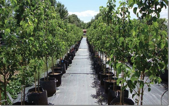 11 Container Grown Trees