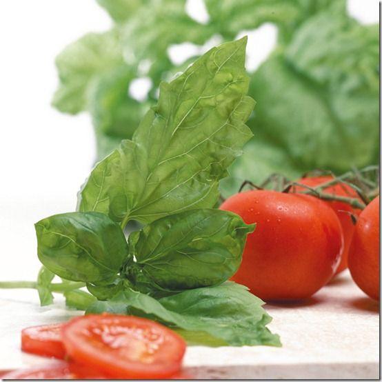 165001_Herbs_Basil_Neapolitan_exp