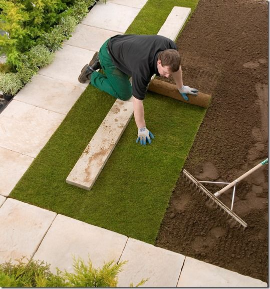 turf being laid, Grass, how to lay sod, how to lay turf, instant lawn, Lawn, Sod, Turf