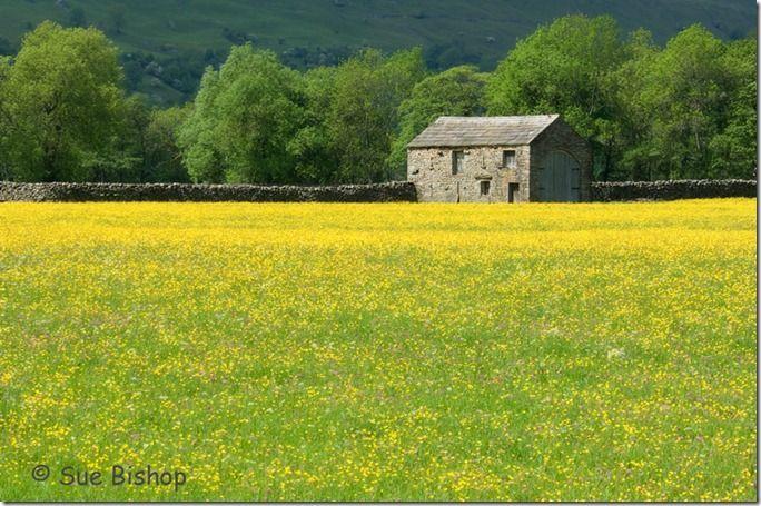 barn and wildflowers