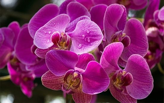 How To Grow & Care For Orchids