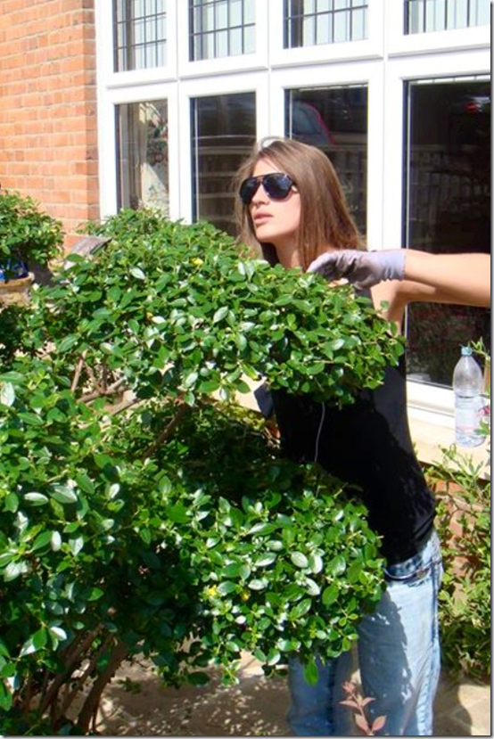 Creative pruning