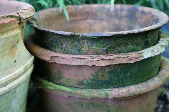 Damaged terracotta pots