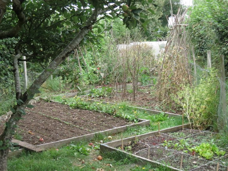 My long, thin, messy but much-loved veg garden feeds my family all year round