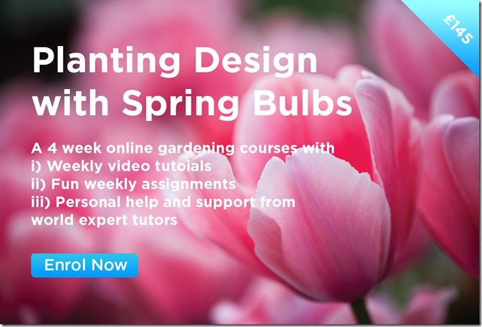 Planting Design with Spring Bulbs