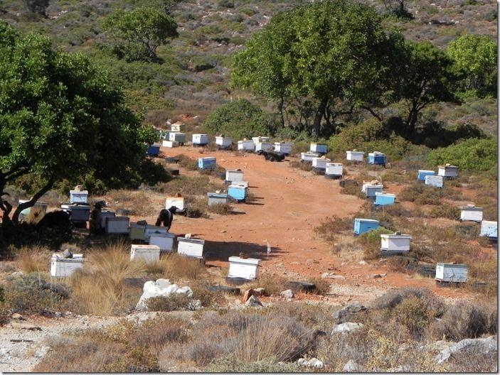 5 Beehives Crete (1024x768)