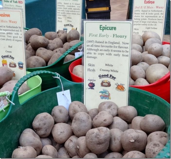 2 Seed potatoes on sale