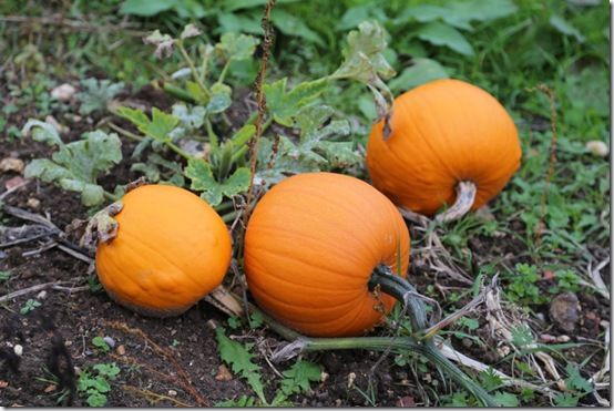 6. Small pumpkins