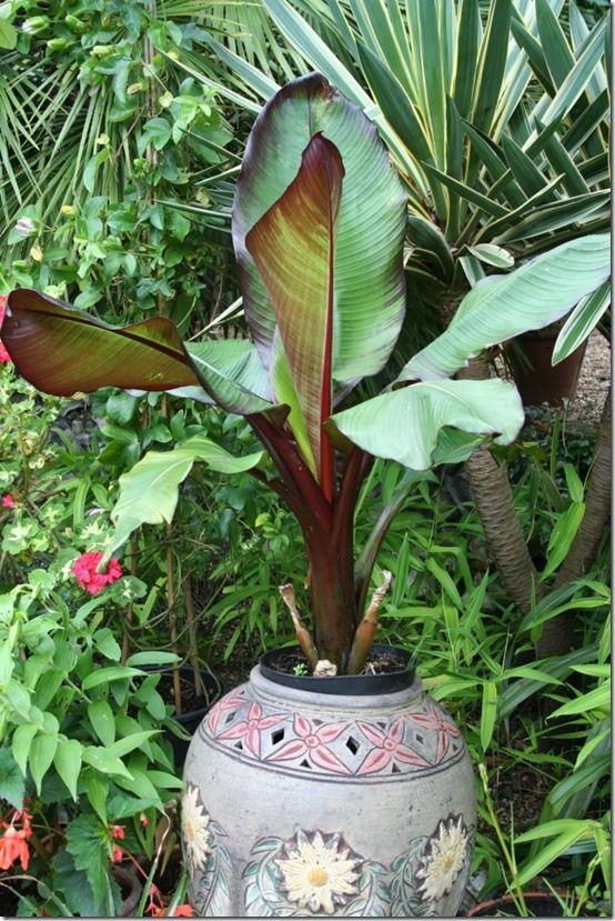 Exotic pot