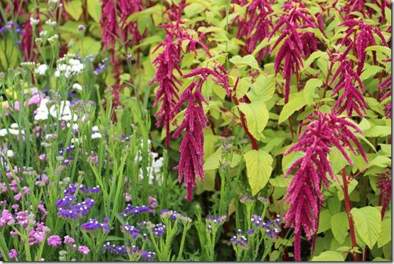 amaranthus and statice