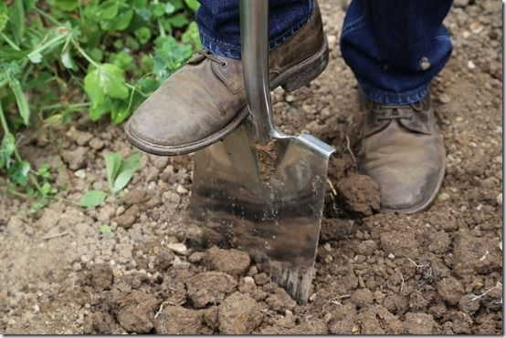 2 Digging with a border spade