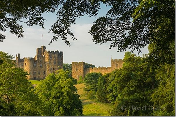 Alnwick Castle framed by trees on a summer's morning, Northumberland, England. The earliest parts of the castle date from the 11th century, though much has been added on over the intervening years