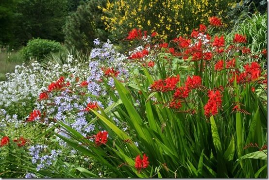 9 Crocosmia 'Lucifer', 10 Great Perennials To Grow For Cutting