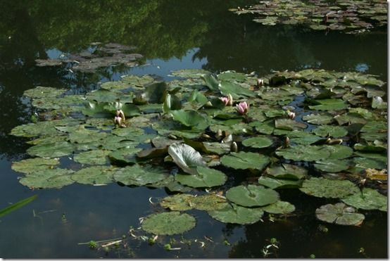 Waterlilies at Giverney