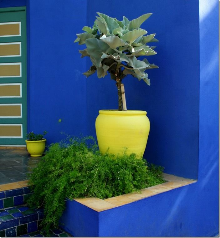 3 Citrus pots and vivid walls