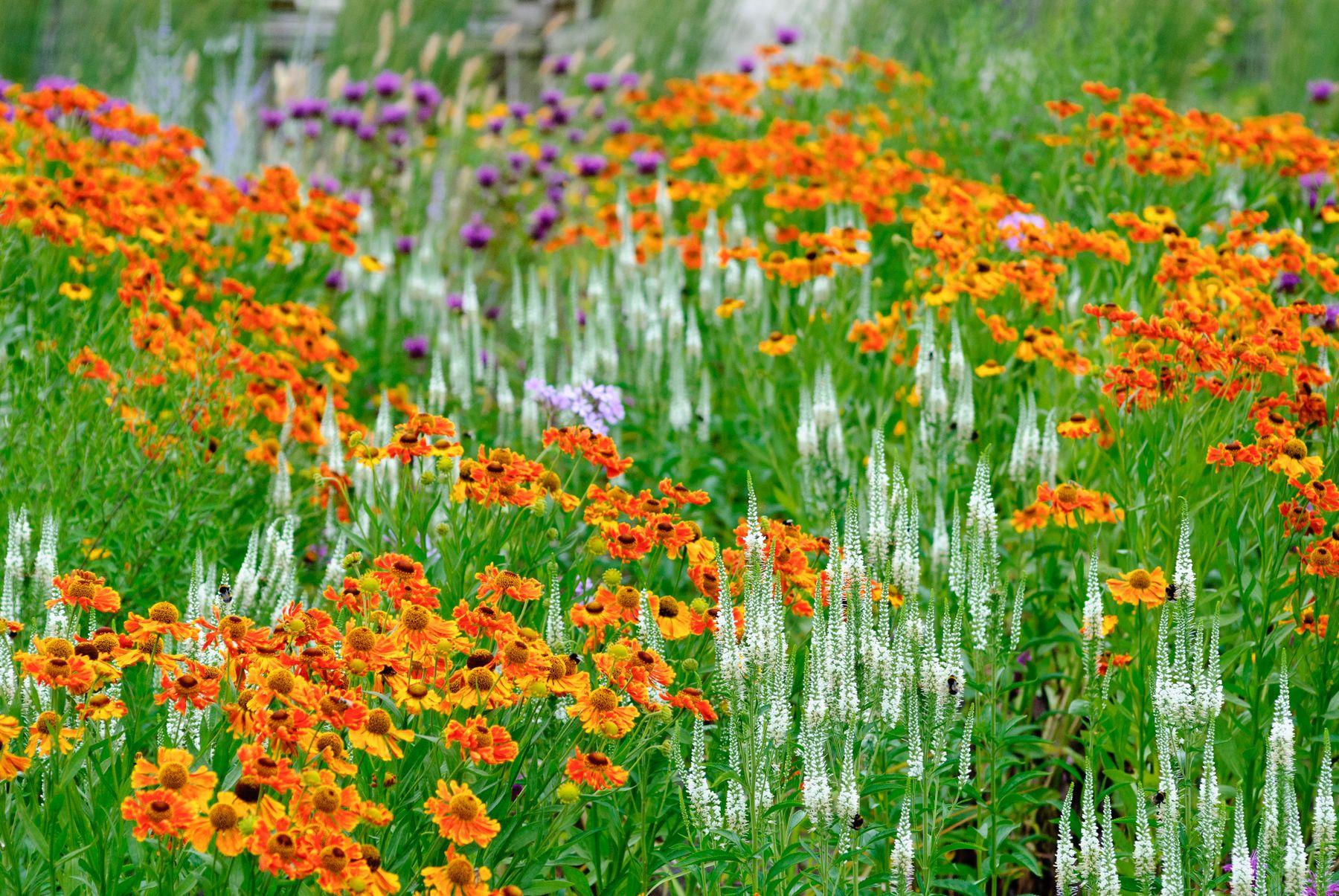 Perennial Planting Design Online Course