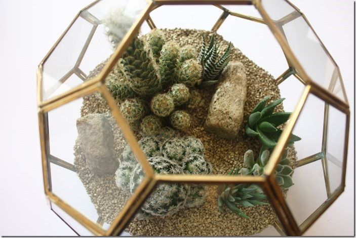 10 cacti and succulents
