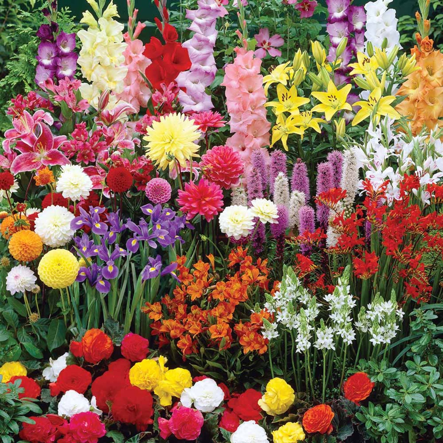 Summer Flowering Bulbs To Grow In Pots For Cutting Gardening