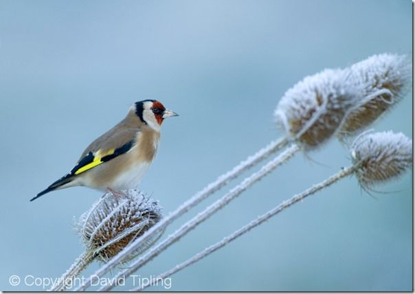 Bird Photography, David Tipling, RSPB, How to Photograph Birds, Garden Birds, Bird Food, perch, feeder,