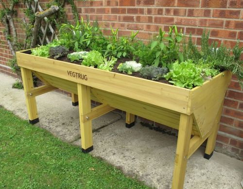 Growing Vegetables In Troughs Gardening Learning With