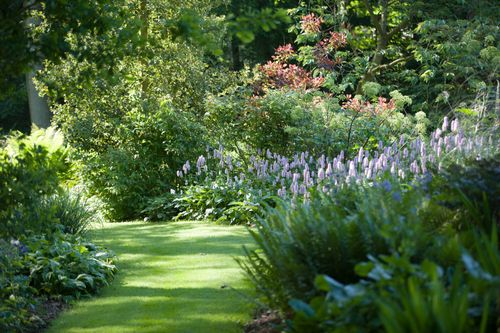 10 Great Plants For Dry Shade