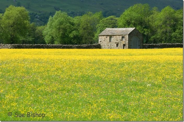 barn and wildflowers