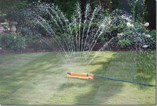 watering, Grass, how to lay sod, how to lay turf, instant lawn, Lawn, Sod, Turf